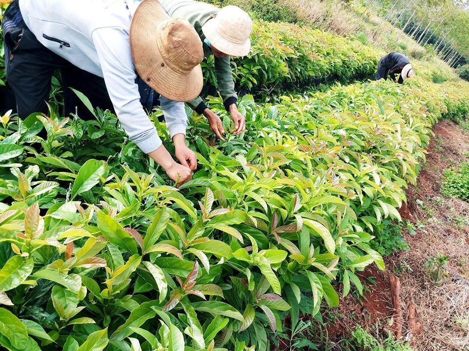 hợp tác xã nông nghiệp thắng lợi