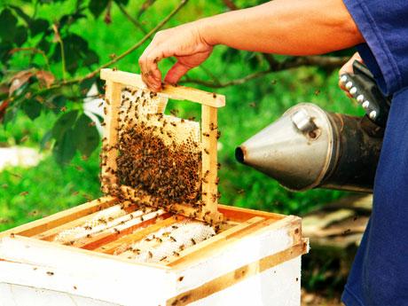 sản phẩm từ mật ong